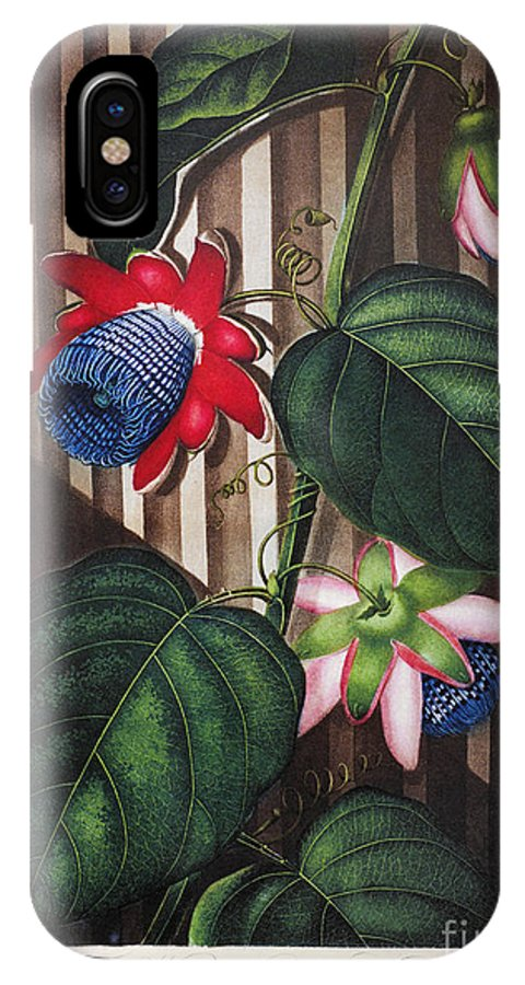 1802 IPhone X Case featuring the photograph Thornton: Passion-flower by Granger