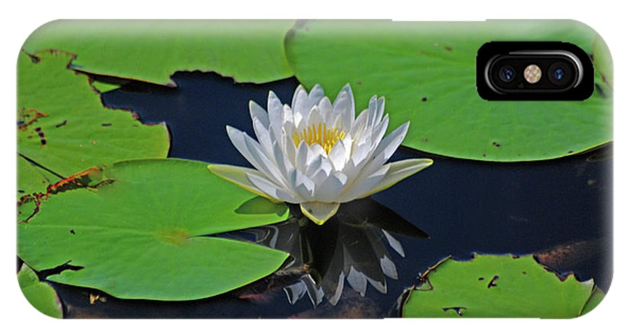 White Water Lily IPhone X Case featuring the photograph 2- White Water Lily by Joseph Keane