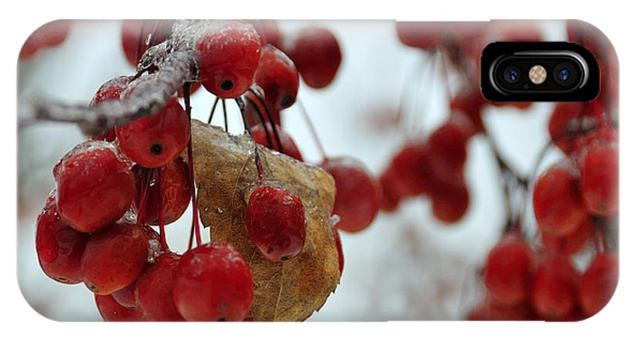 Winter IPhone X Case featuring the photograph Winter Berries by David Arment