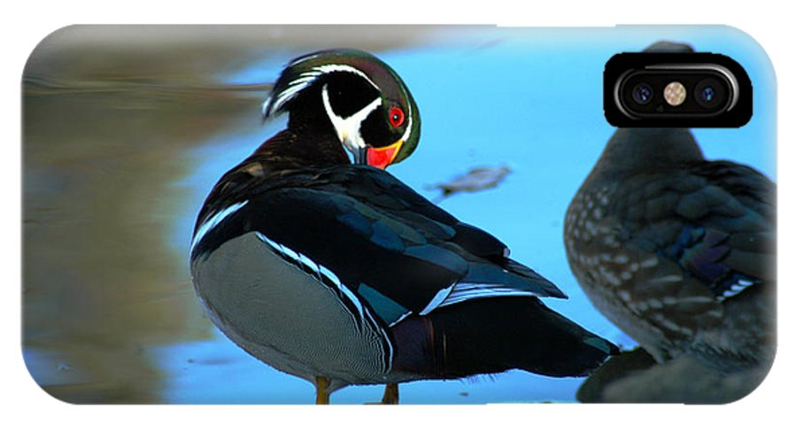 Clay IPhone Case featuring the photograph Wood Duck by Clayton Bruster