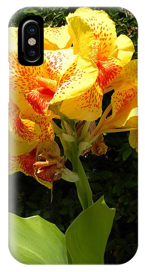 Flower IPhone X Case featuring the photograph Yellow Canna Lily by Terri Mills