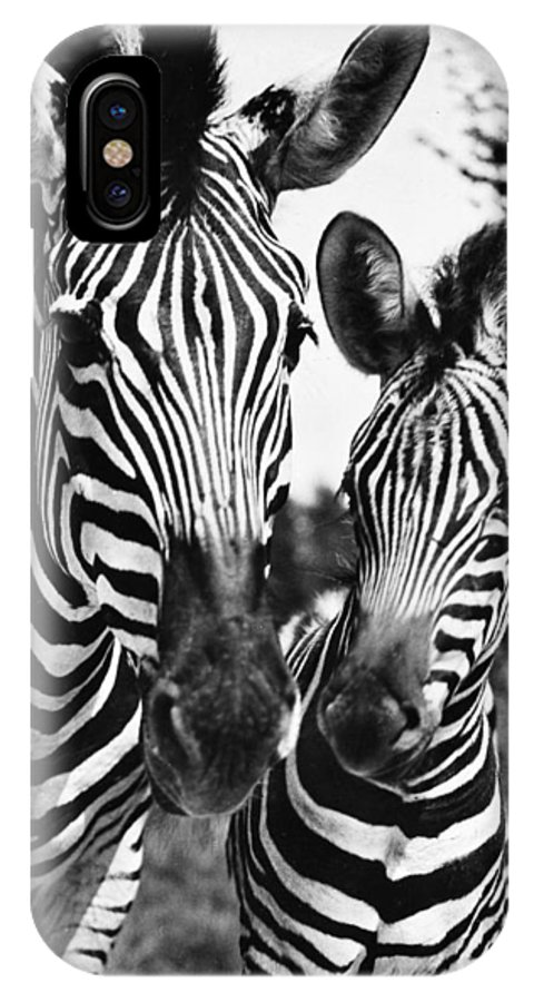 20th Century IPhone X Case featuring the photograph Zebra by Granger
