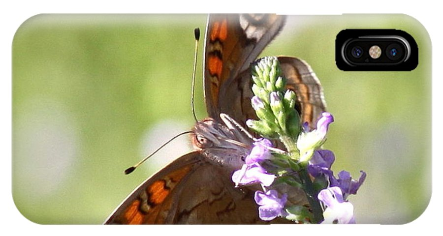 Butterfly IPhone X / XS Case featuring the photograph 2065 - Butterfly by Travis Truelove