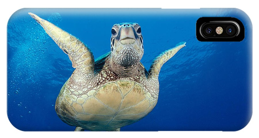 A77a IPhone X Case featuring the photograph Green Sea Turtle by Dave Fleetham - Printscapes