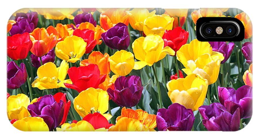 Amsterdam IPhone X Case featuring the photograph Amsterdam Tulips. by Oscar Williams