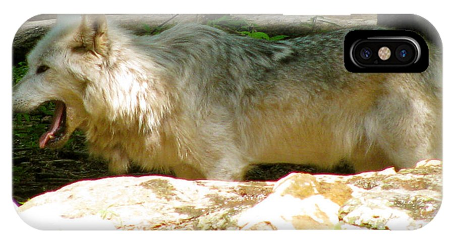 Stay Cool IPhone X Case featuring the photograph The Wild Wolve Group A by Debra   Vatalaro