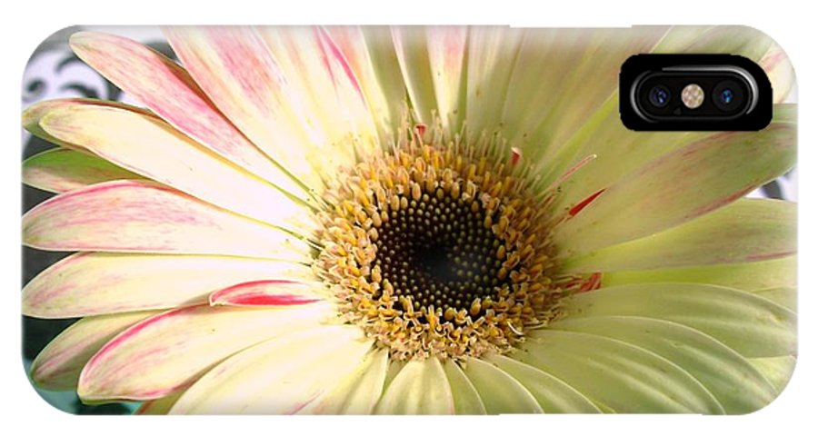 Gerbera Photographs IPhone X Case featuring the photograph 2567c2 by Kimberlie Gerner