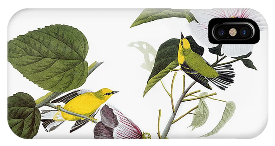 1827 IPhone X Case featuring the drawing Blue-winged Yellow Warbler by John James Audubon