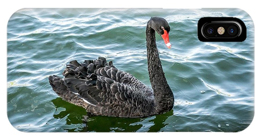 Swan IPhone X Case featuring the photograph Black Swan by FL collection