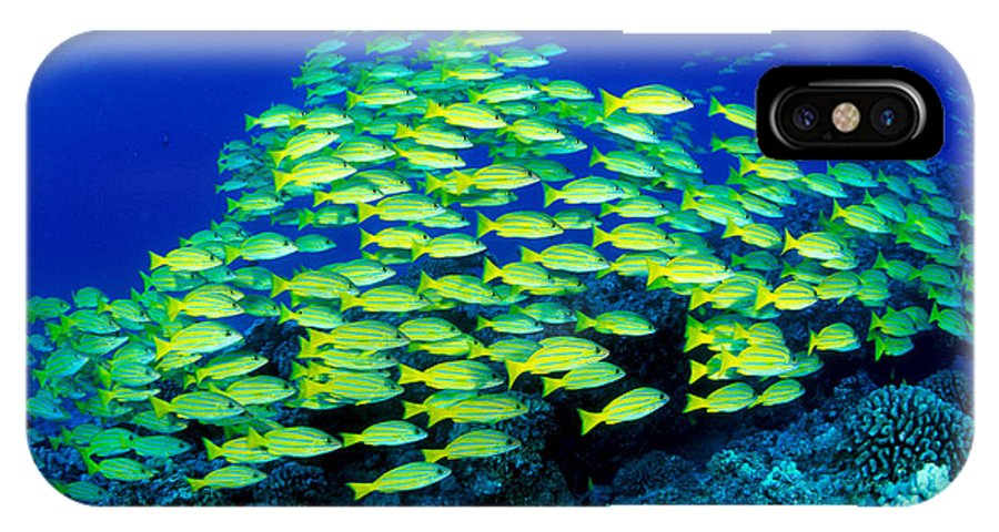 30-pfs0059 IPhone X Case featuring the photograph Bluestripe Snapper by Dave Fleetham - Printscapes