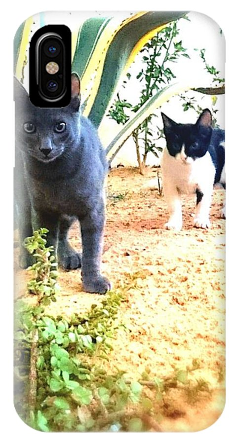 3cats Cat Cats Attack Green Cactus Grey Cat IPhone X Case featuring the photograph 3 Cat Attack by Mina Milad
