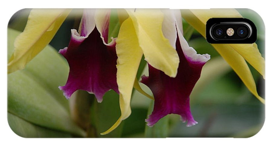 Macro IPhone X Case featuring the photograph Double Orchid by Rob Hans