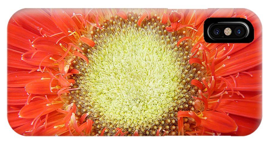 Gerbera IPhone X Case featuring the photograph Gerbera 3 by Daniel Csoka