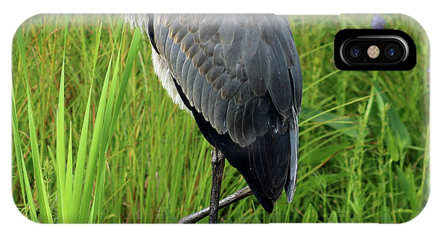 Great Blue Heron IPhone X Case featuring the photograph Great Blue Heron by Mandy Myers