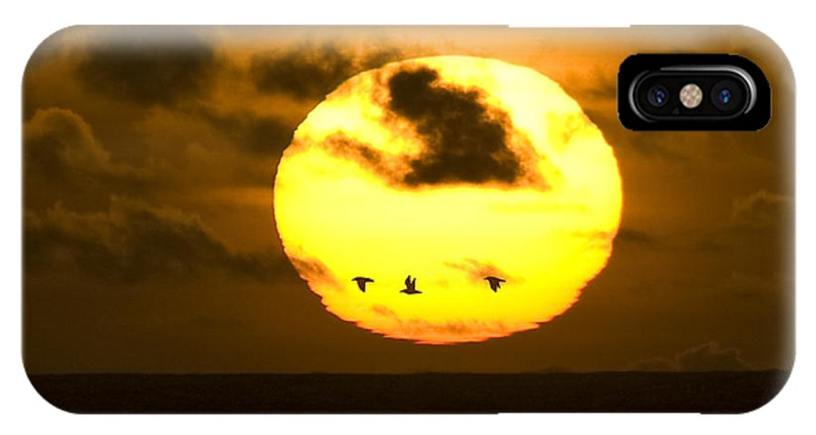 Sun IPhone X Case featuring the photograph 3 Gulls by Larry Keahey