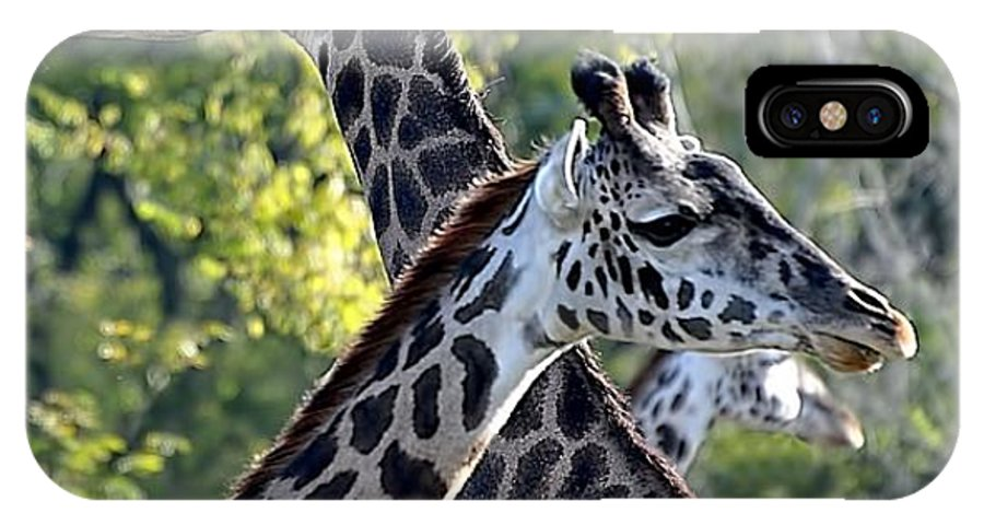 Animals IPhone X Case featuring the photograph 3 Heads Are Better Than 1 by Jan Amiss Photography