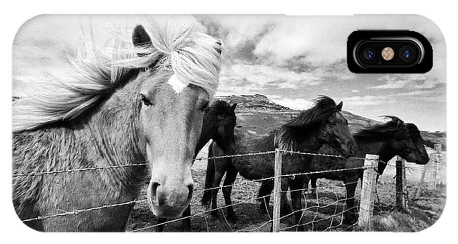 Iceland IPhone X / XS Case featuring the photograph Icelandic Horses Iceland by Joe Fox