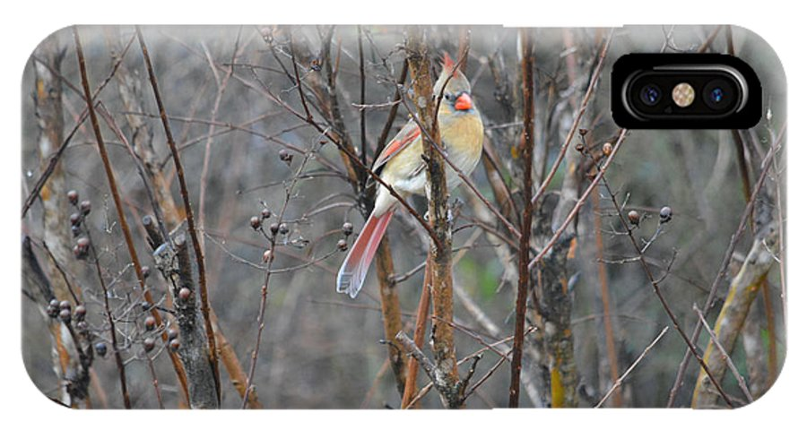 Northern Female Cardinal Prints IPhone X Case featuring the photograph Northern Female Cardinal by Ruth Housley
