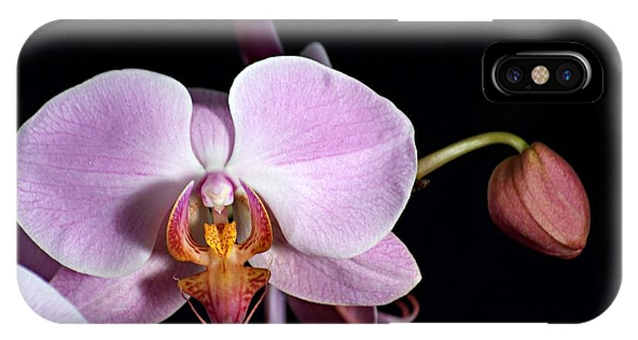 Beauty IPhone X Case featuring the photograph Pink Orchid V by Ralf Broskvar