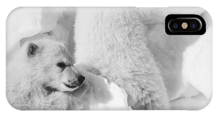 20th Century IPhone X Case featuring the photograph Polar Bear Cubs by Granger