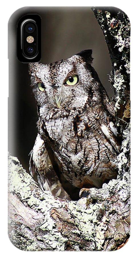 Screech Owl IPhone X Case featuring the photograph Screech Owl by SC Shank
