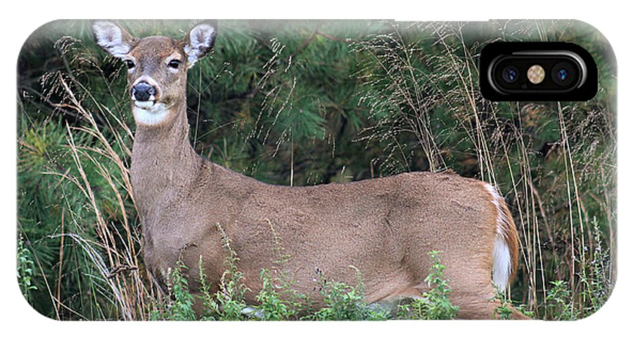 White Tail Deer IPhone X Case featuring the photograph White Tailed Deer Calverton New York by Bob Savage