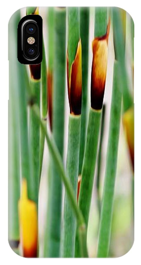 Close Up; Decorative; Bamboo; Grass; Green; Brown; Plant; Garden; Background; Werner Lehmann; IPhone X Case featuring the photograph Bamboo Grass by Werner Lehmann