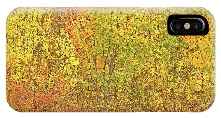 Autumn Colours IPhone X Case featuring the photograph 3991 Autumn Profusion by Darrel Giesbrecht