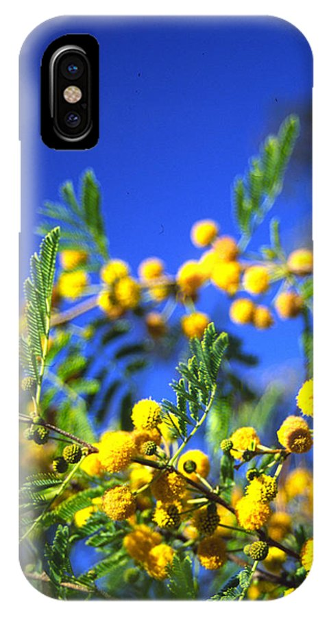 Tree Blooms IPhone X Case featuring the photograph 3rd Dimension by Randy Oberg