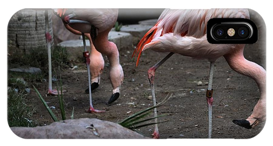 Flamingos IPhone X Case featuring the photograph 3's Company by Robert McCubbin