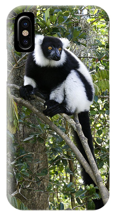 Madagascar IPhone X Case featuring the photograph Black And White Ruffed Lemur by Michele Burgess