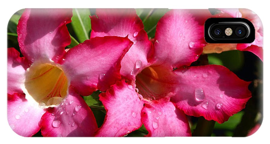 Desert Rose; Desert; Rose; Red; Pink; Flower; Bush; Garden; Florida; Plant; Adenium; Obesum; Africa; IPhone X Case featuring the photograph Desert Rose by Allan Hughes