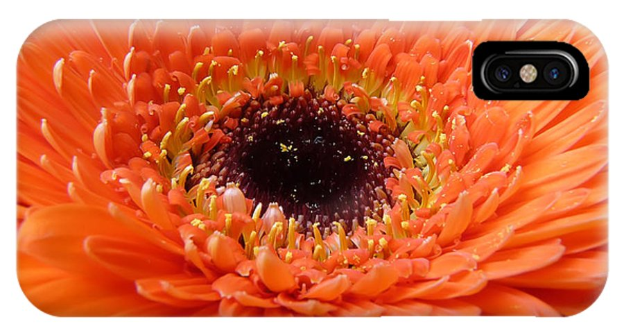 Gerbera IPhone Case featuring the photograph Gerbera by Daniel Csoka