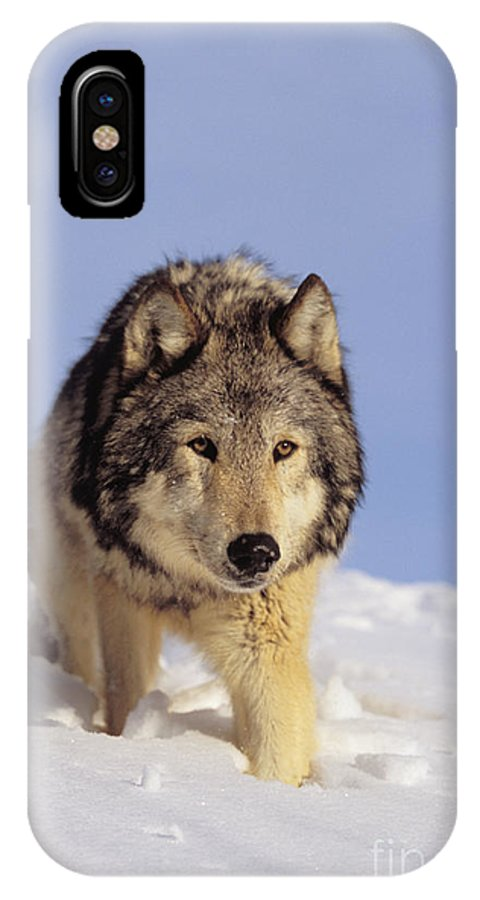 Afternoon IPhone X Case featuring the photograph Gray Wolf by John Hyde - Printscapes