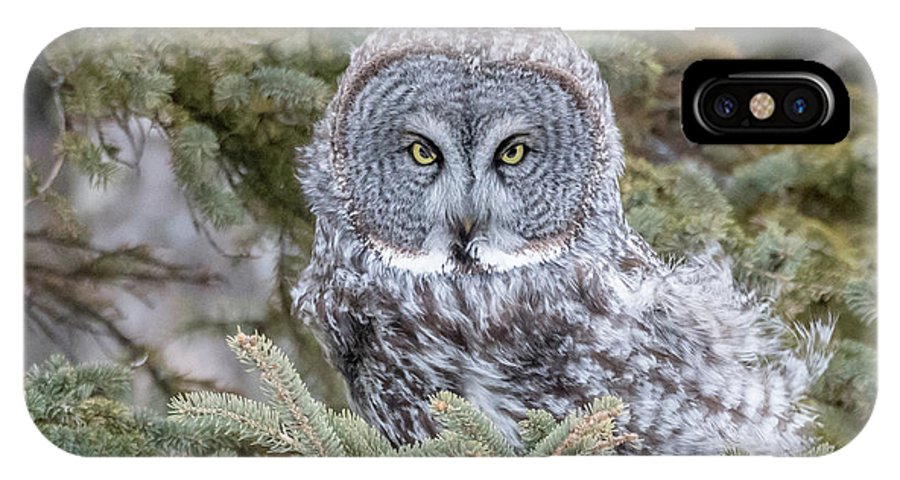 Mike Timmons IPhone X Case featuring the photograph Great Gray Owl by Mike Timmons