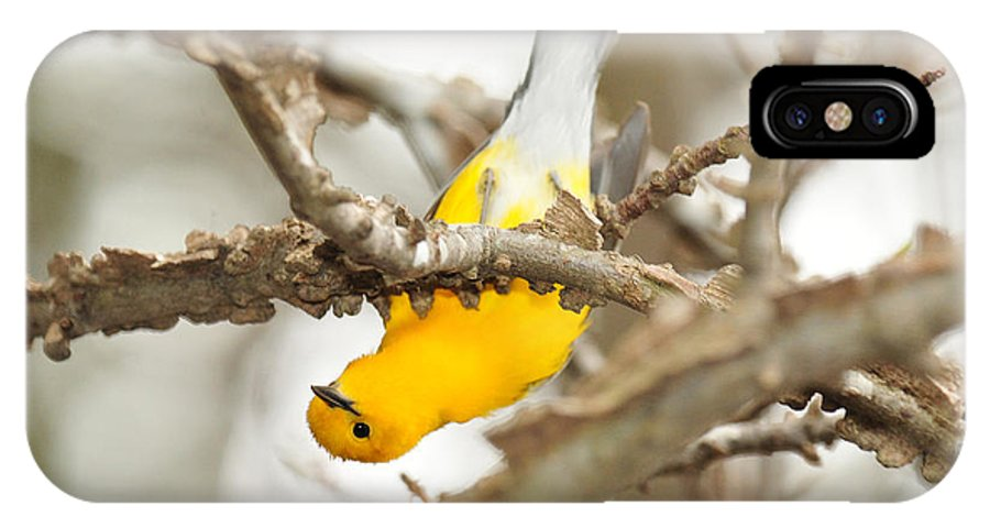 Prothonotary Warbler IPhone X Case featuring the photograph Prothonotary Warbler by Eric Abernethy