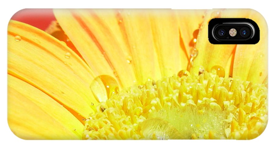 Gerbera Photographs Photographs Photographs IPhone X Case featuring the photograph 4173-001 by Kimberlie Gerner