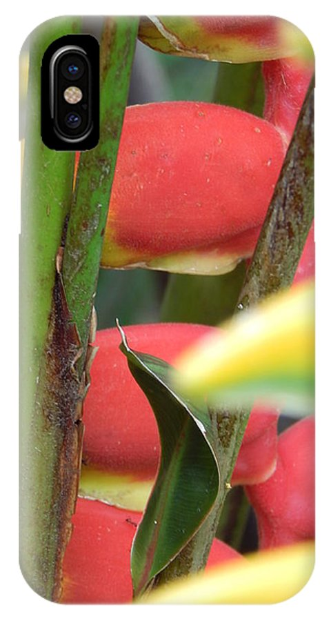 Plant IPhone X / XS Case featuring the photograph Natural by Beto Machado