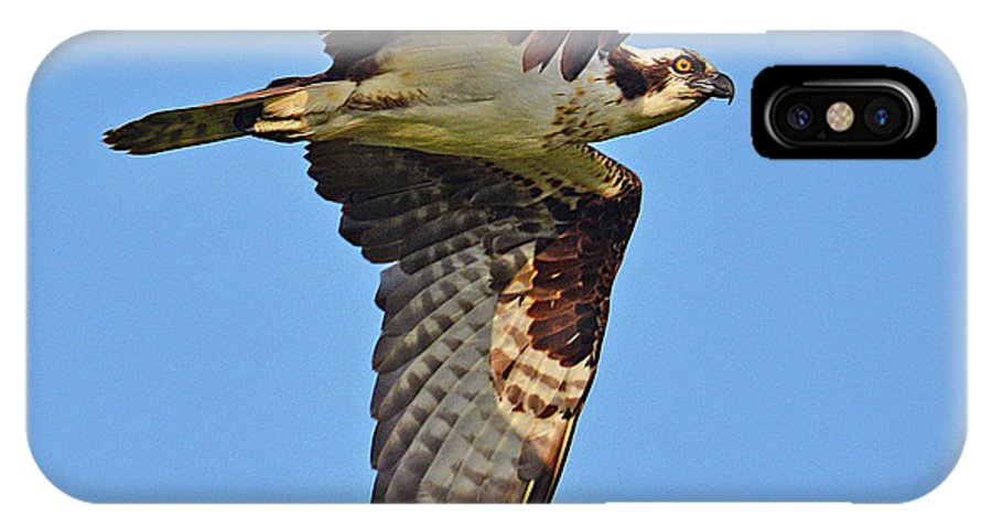 Bird IPhone X / XS Case featuring the photograph Osprey by Lindy Pollard