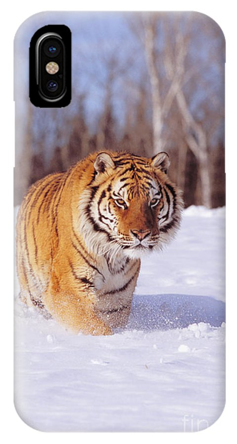 Afternoon IPhone X Case featuring the photograph Siberian Tiger by John Hyde - Printscapes