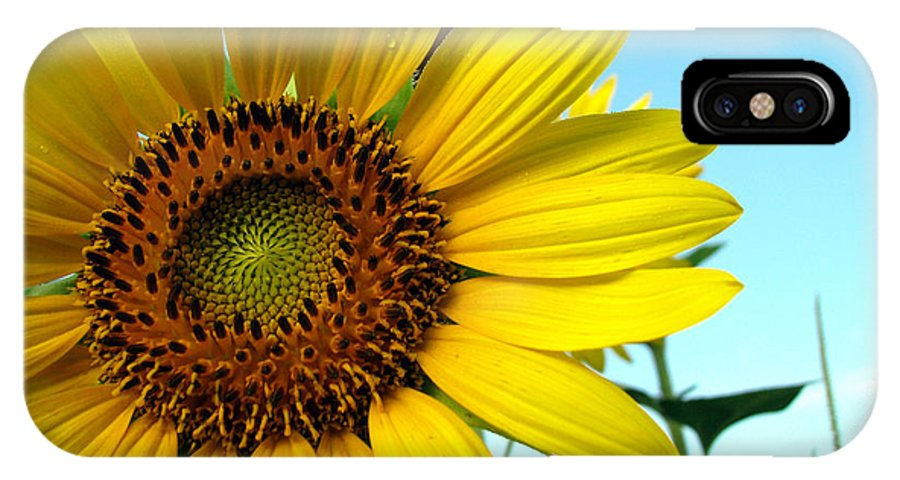 Sunflowers IPhone X Case featuring the photograph Sunflower Series by Amanda Barcon