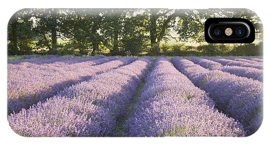 Lavender IPhone X Case featuring the photograph Lavender Fields by Ian Middleton