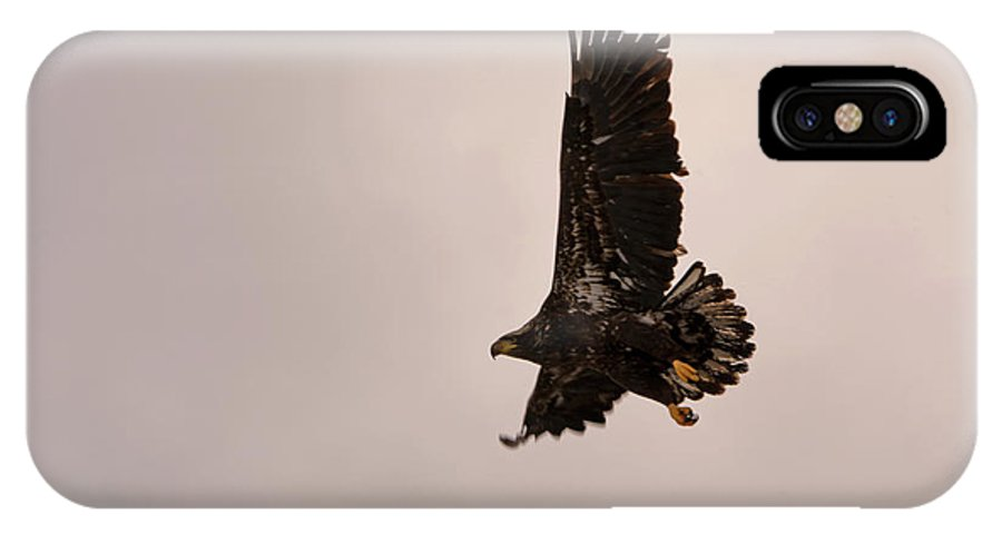 Bald Eagle IPhone X Case featuring the photograph Take Off by Linda Kerkau