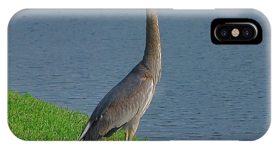 Great IPhone X Case featuring the photograph 7- Great Blue Heron by Joseph Keane