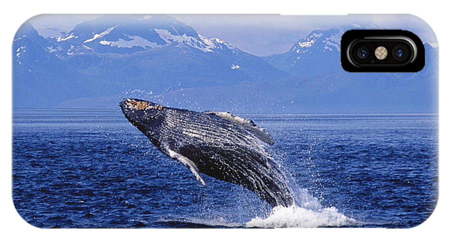 Alaska IPhone X Case featuring the photograph Humpback Whale Breaching by John Hyde - Printscapes