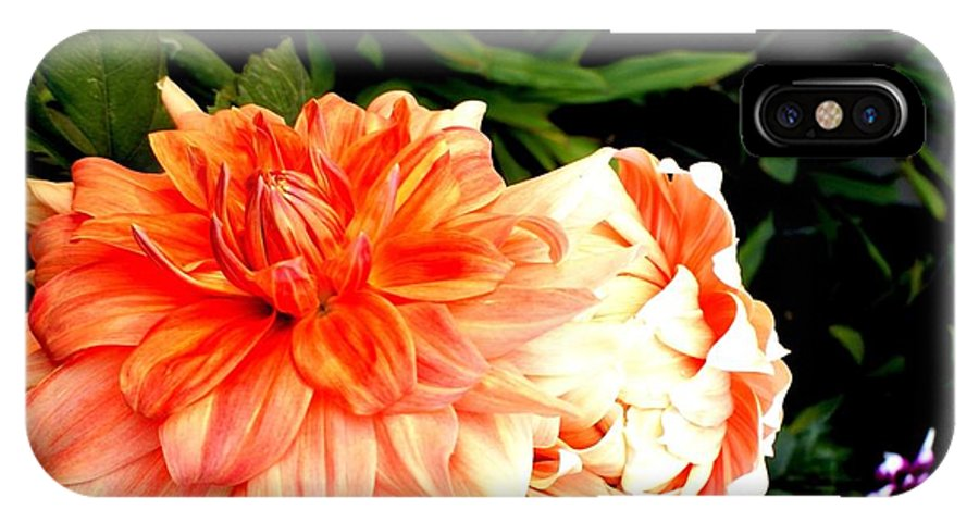 IPhone X Case featuring the photograph Love Flowers by Baljit Chadha