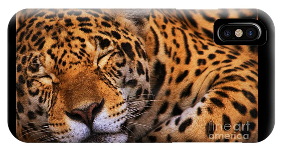Leopard IPhone X Case featuring the photograph Leopard by White Stork Gallery