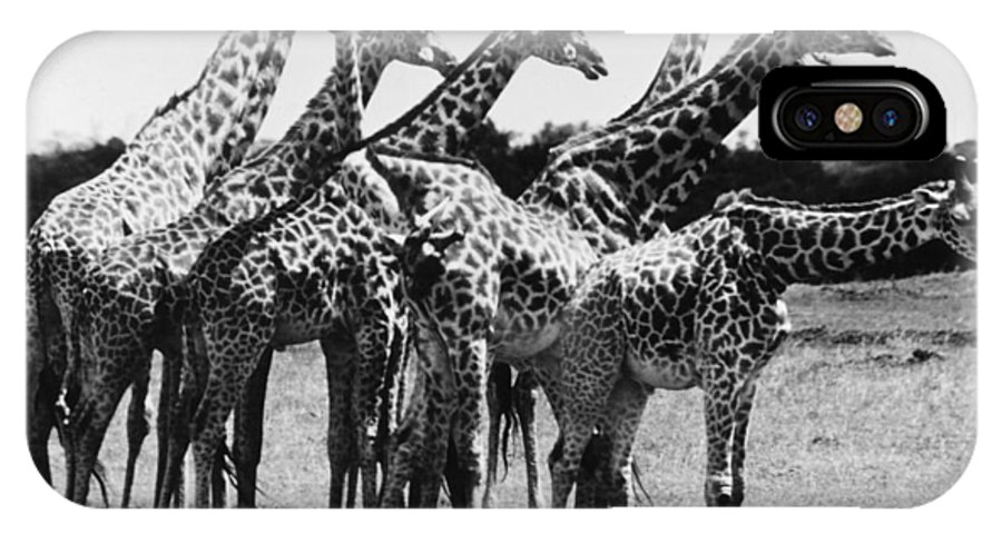 20th Century IPhone X Case featuring the photograph Giraffe by Granger