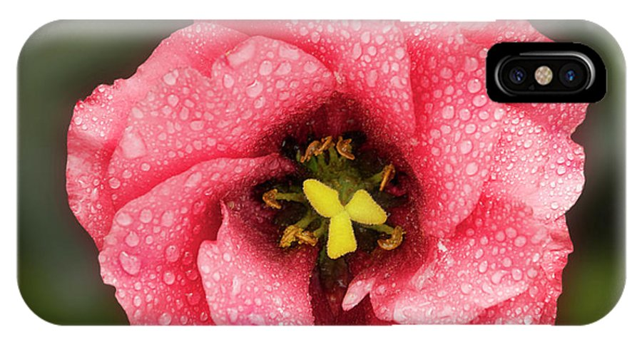Flowers IPhone X Case featuring the photograph Nice Flower by Elvira Ladocki