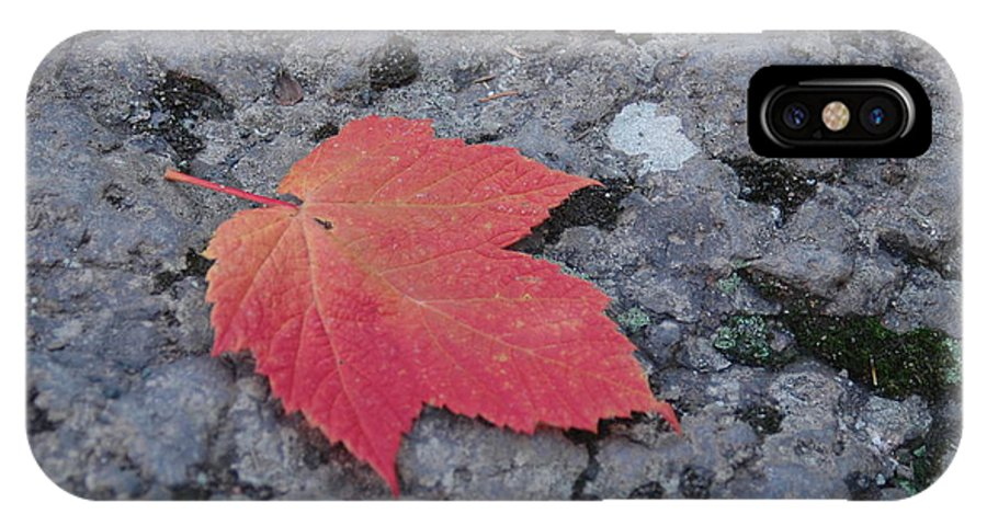 Leaf IPhone X / XS Case featuring the photograph Untitled by Kathy Schumann